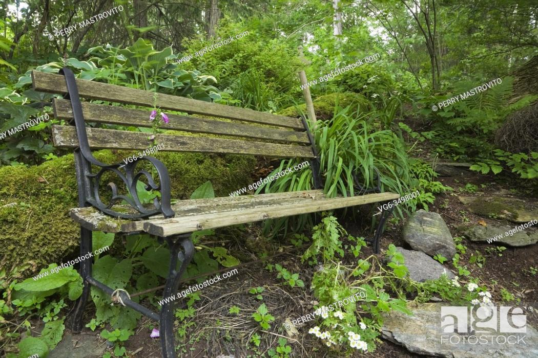 Stock Photo: Old black cast iron metal and wood sitting bench covered with green Bryophyta - Moss and lichen growth in private backyard garden in summer.