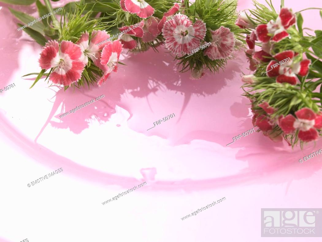 Stock Photo: Sweet william on a pink plate.