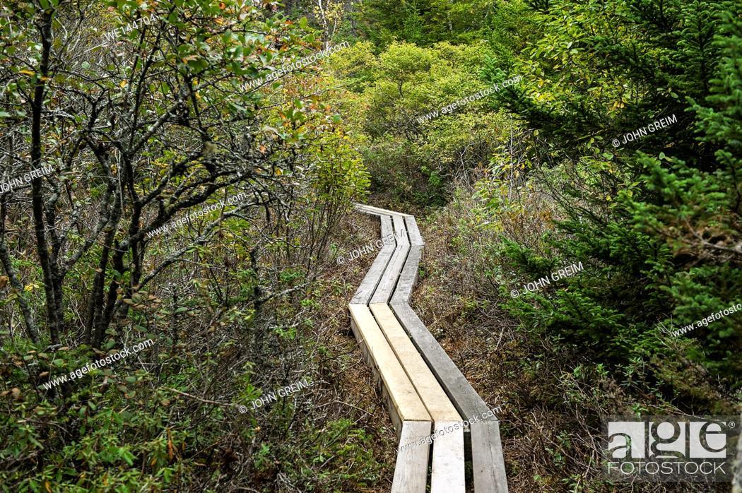 Stock Photo: Hiking trail, Acadia National Park, Maine, USA, USA.