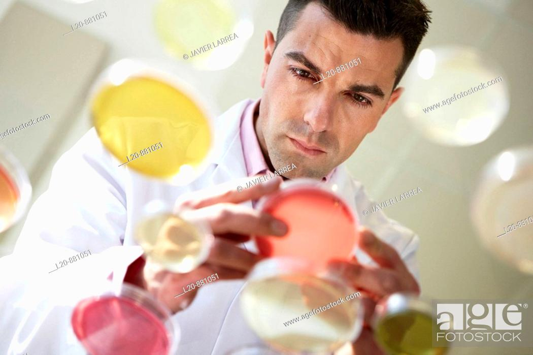 Stock Photo: Petri dishes, Physical Chemical Laboratory, Azti-Tecnalia, Marine and Food Research Technological Centre, Derio, Biscay, Basque Country, Spain.