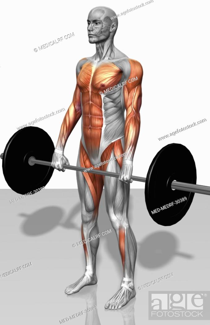 Stock Photo: Barbell deadlift Part 1 of 2.