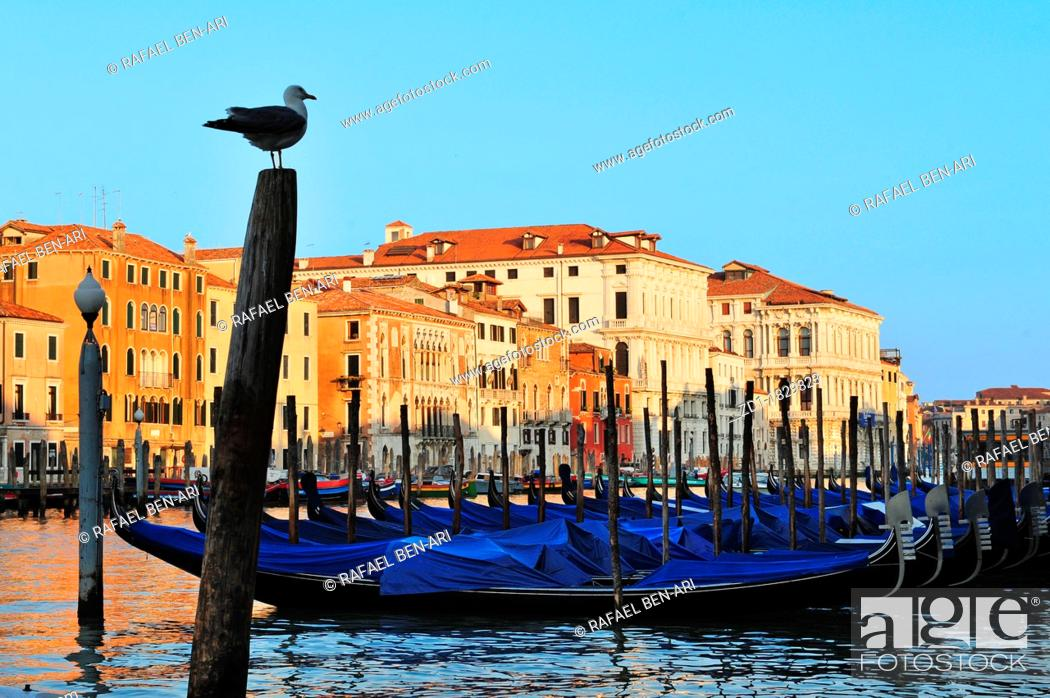 Stock Photo: Gondolas mooring in the Grand Canal in Venice.