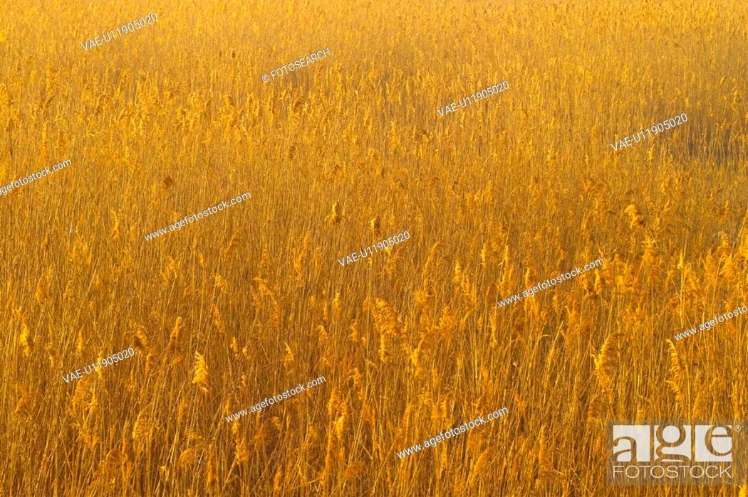 Stock Photo: landscape, nature, eulalia, plant, scenery, scenic, field.