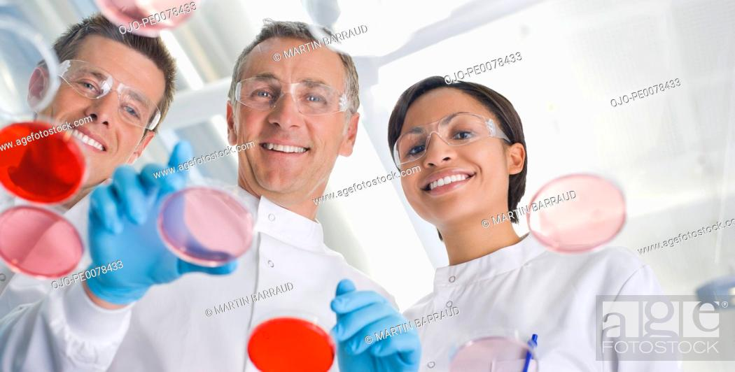 Stock Photo: Scientists examining petri dishes in lab.