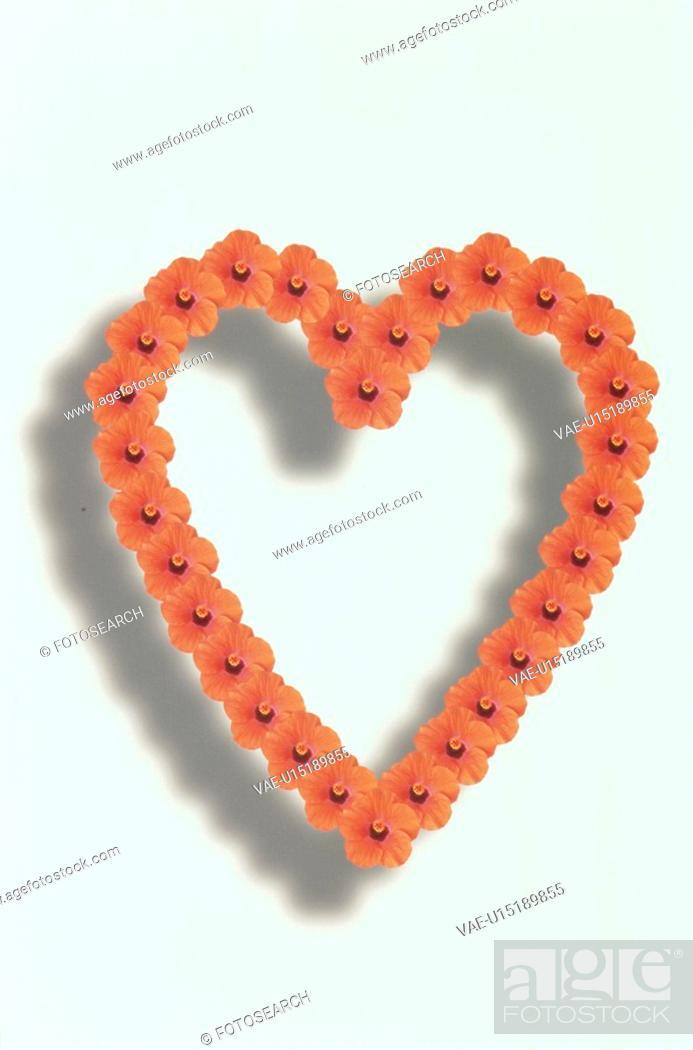 Stock Photo: The Heart.