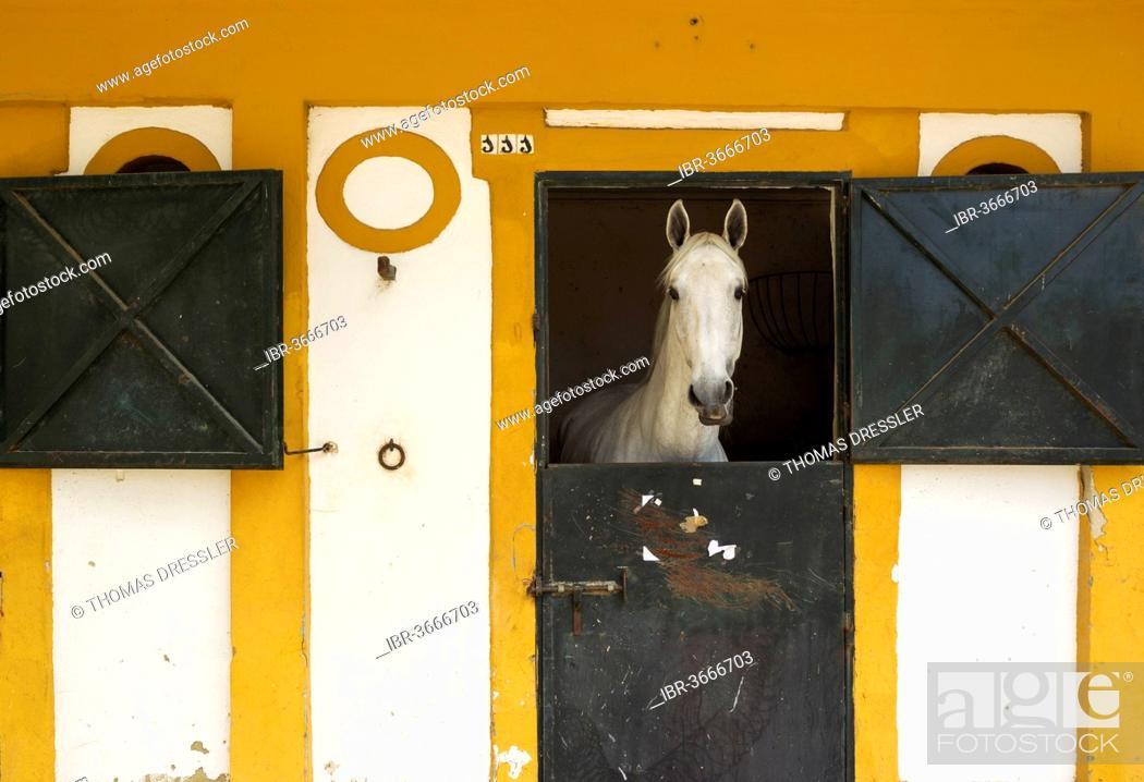 Stock Photo: Mare in a stable during the Feria del Caballo, Horse Festival, Jerez de la Frontera, Cádiz province, Andalusia, Spain.