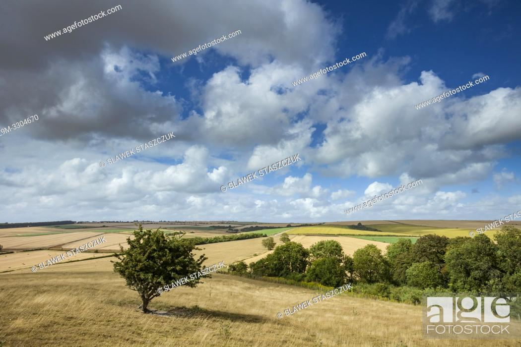 Stock Photo: Summer afternoon in South Downs National Park, West Sussex, England.