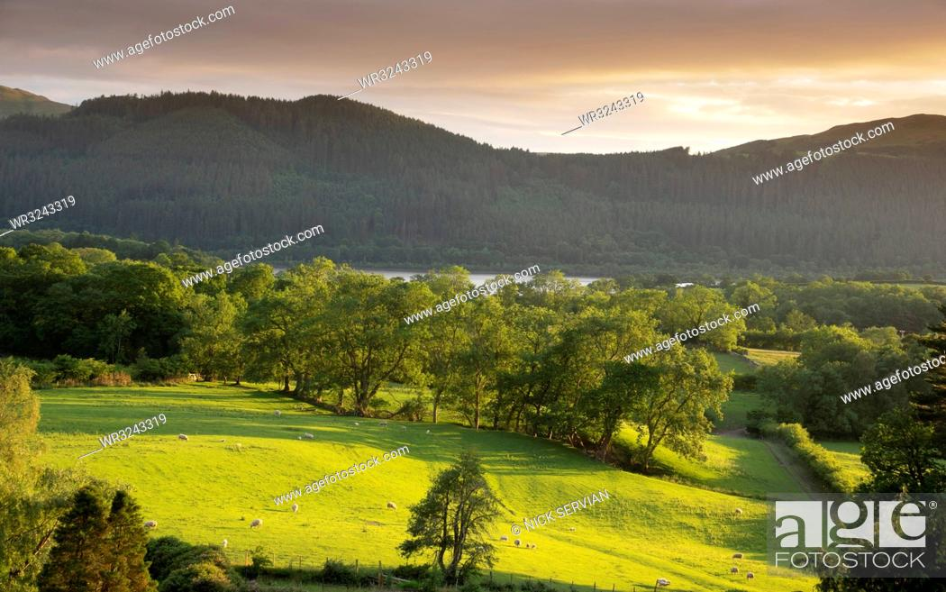 Stock Photo: View with Bassenthwaite Lake in distance, Lake District National Park, UNESCO World Heritage Site, Cumbria, England, United Kingdom, Europe.