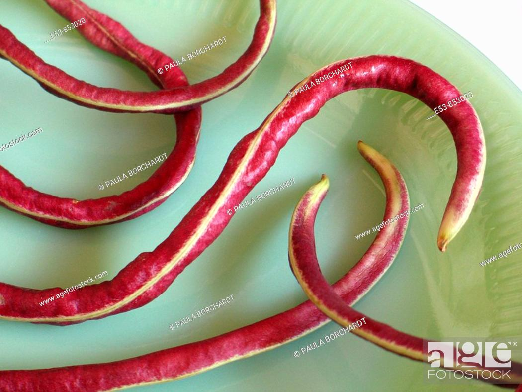 Stock Photo: organic red noodle beans from a CSA Community Supported Agriculture © Paula Borchardt - All rights reserved.