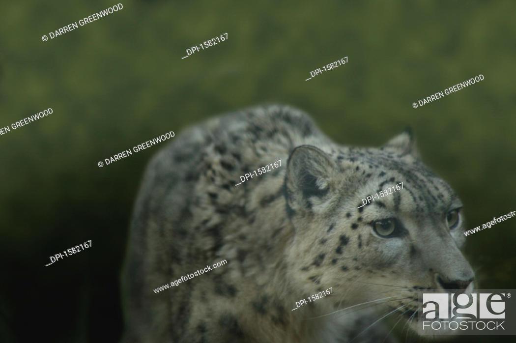 Stock Photo: Animals.