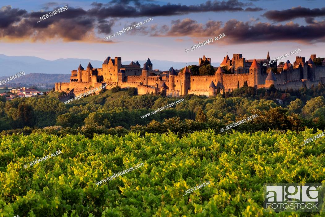 Stock Photo: Vineyards and medieval fortified town at sunset, Carcassonne, Aude, Languedoc-Roussillon, France, Europe.