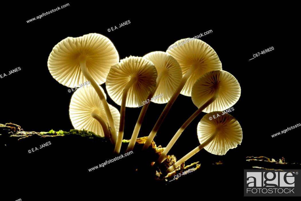 Stock Photo: Common Woodland Autumn Fungi. Herts. UK October.