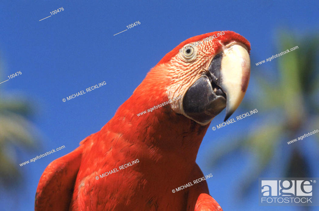 Stock Photo: Macaw.
