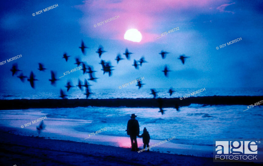 Stock Photo: Flock of birds at sunset on the beach.