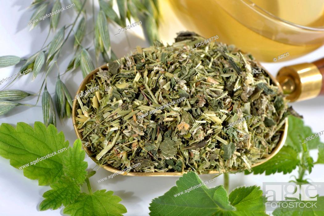 Stock Photo: Green Oat tea, Common oat, Nettle herb, Alpine lady's mantle / (Avena sativa), (Urtica dioica), (Alchemilla alpina).