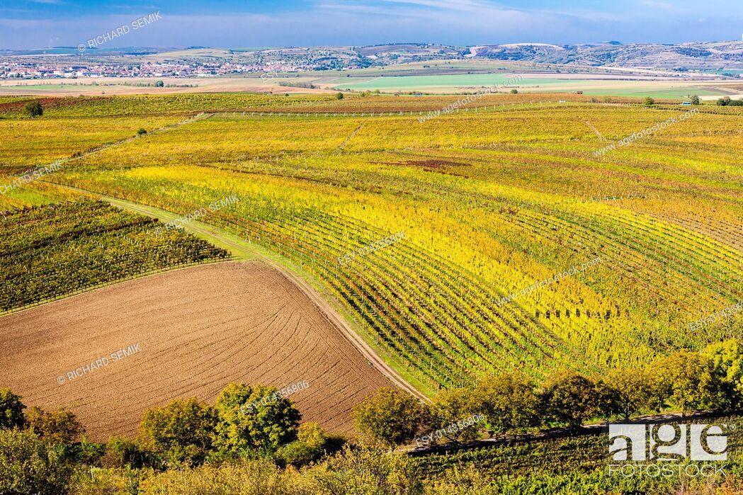 Stock Photo: view of autumnal vineyards near Velke Bilovice, Czech Republic.