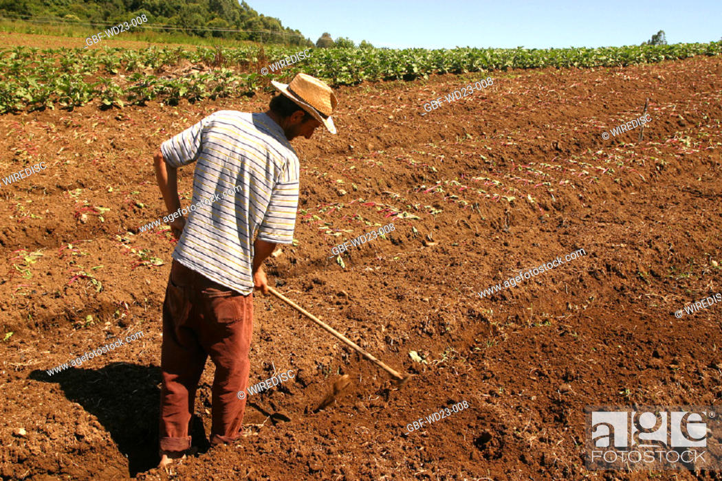 Stock Photo: People, man, plantations, agriculture, Brazil.