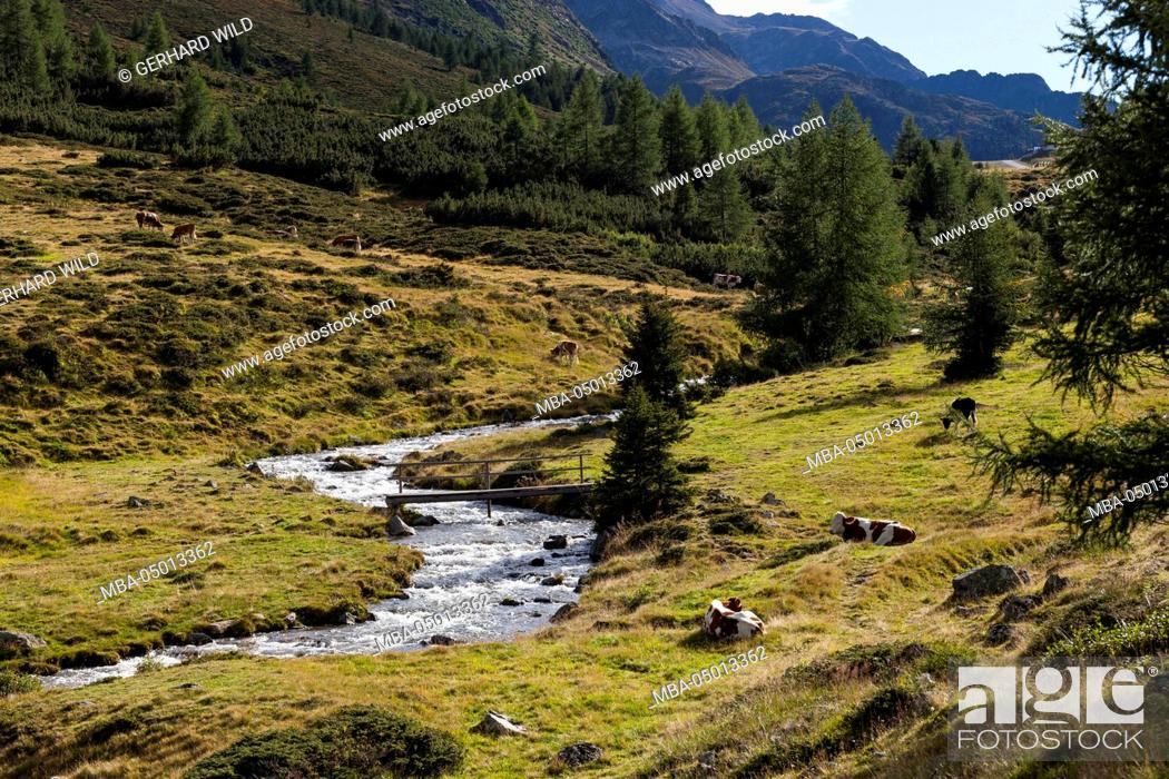Austria, East Tyrol, Staller Saddle, mountain stream with
