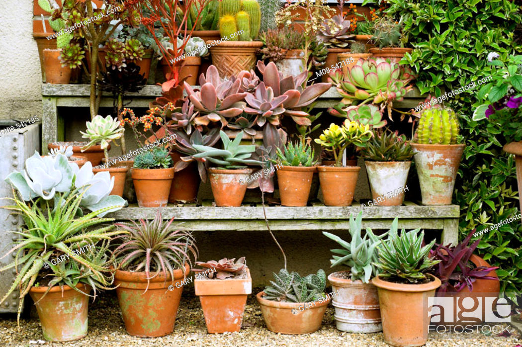 Stock Photo: Collection of pots with succulents on tiered display,.