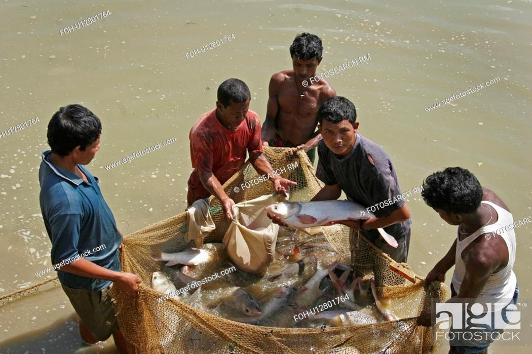 Stock Photo: bangladesh, water, fish, person, people, business.