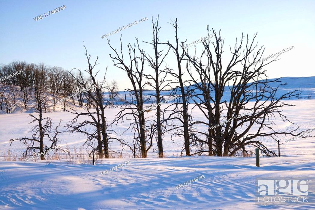 Stock Photo: Leafless snow covered trees in winter.