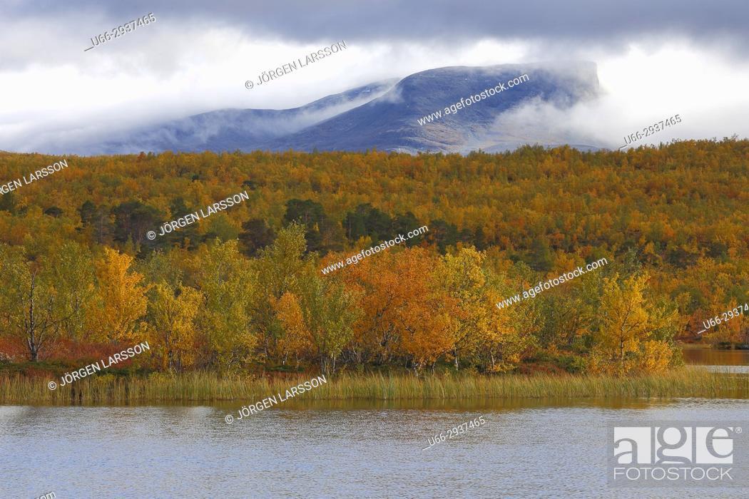 Stock Photo: Autumn colours inAbisko national park Lappland Sweden.