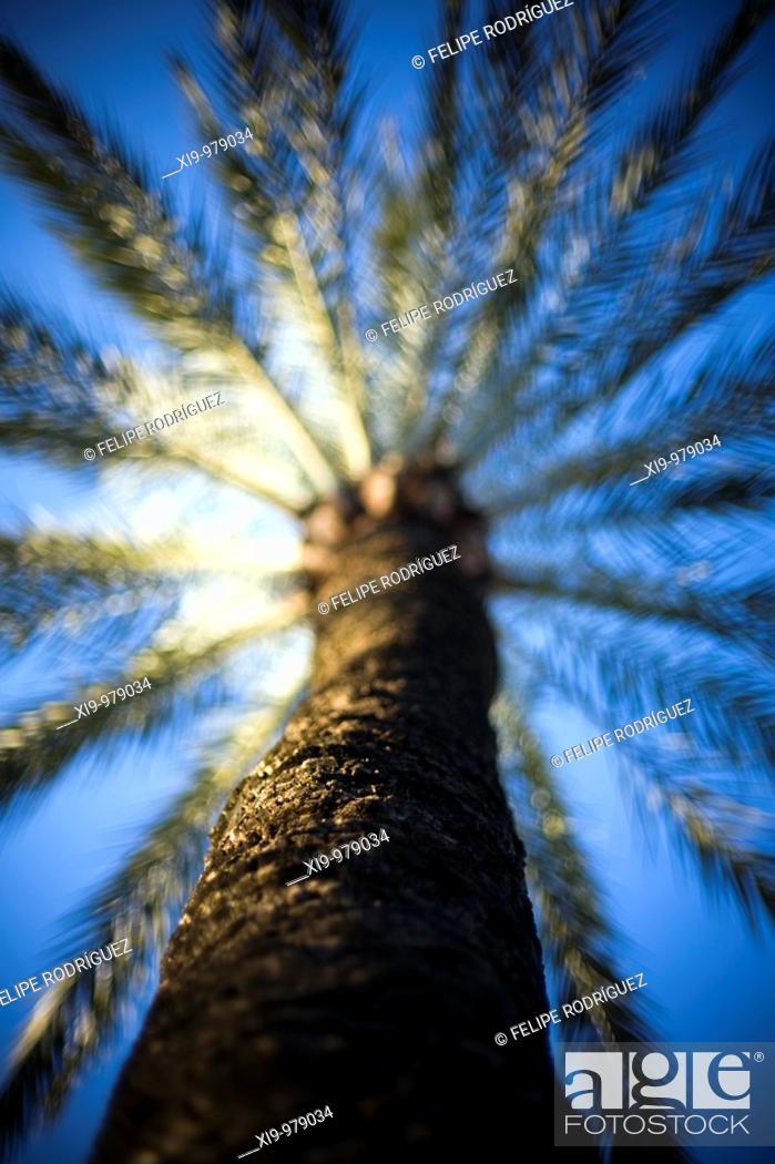 Stock Photo: Palm tree, Seville, Spain.