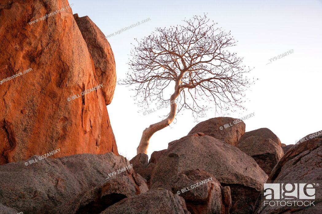 Stock Photo: Lone tree in Damaraland's rocky landscape - Damaraland, Namibia, Africa.
