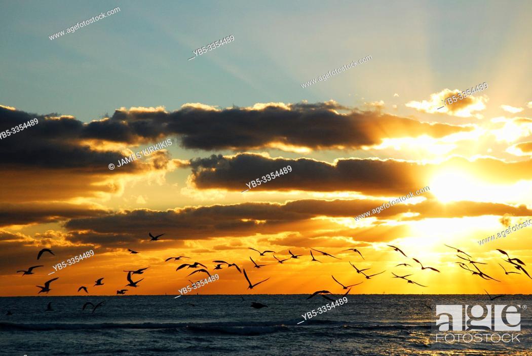 Stock Photo: Seagulls take flight over the sea during sunrise.