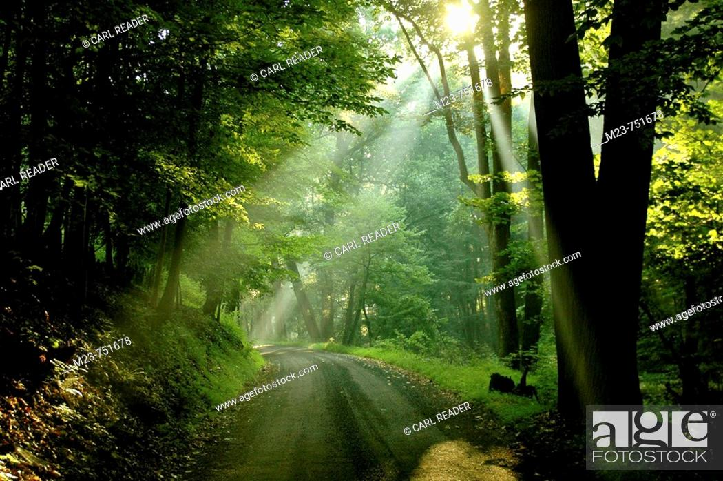 Stock Photo: Summer sunlight seems to signal that eternity lies just around the bend of a dirt road, New Jersey, USA.