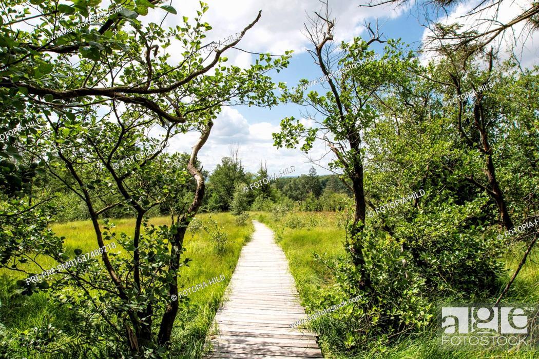 Stock Photo: Track at Hühnerfeld nature reserve, Kaufunger Wald, Göttingen district, Lower Saxony, Germany / Weg durch das Naturschutzgebiet Hühnerfeld, Kaufunger Wald.
