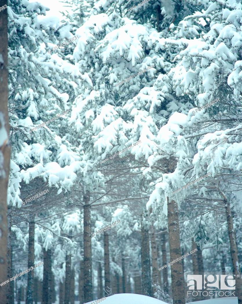 Stock Photo: scene, nature, snow, tree, scenery, view, winter.