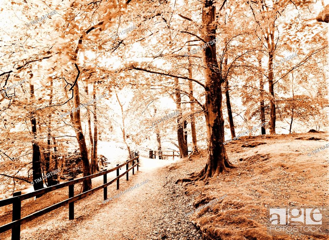 Stock Photo: small wood autumn,Lake District, England, UK.