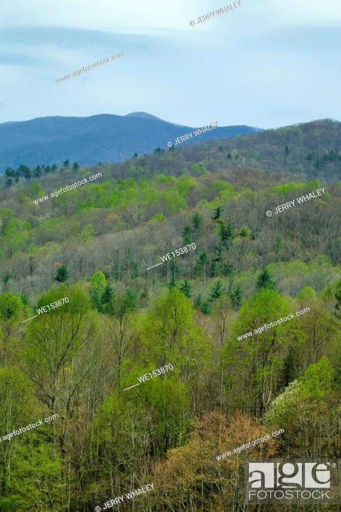 Stock Photo: Pisgah National Forest in North Carolina.