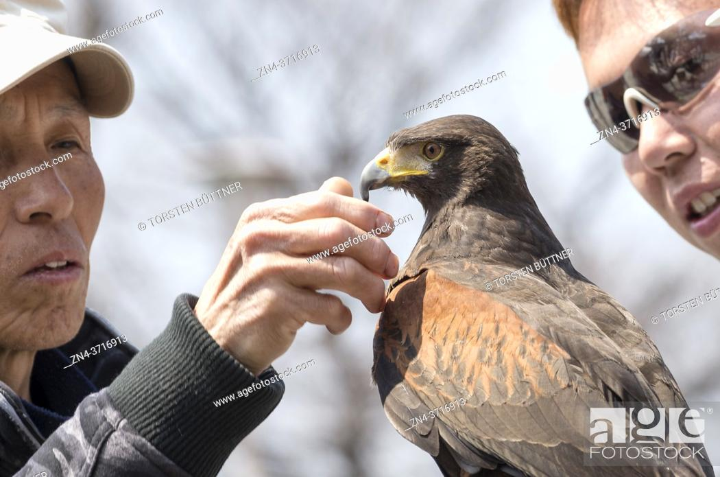 Stock Photo: Falconer with falcon at a street festival, Osaka, Japan.