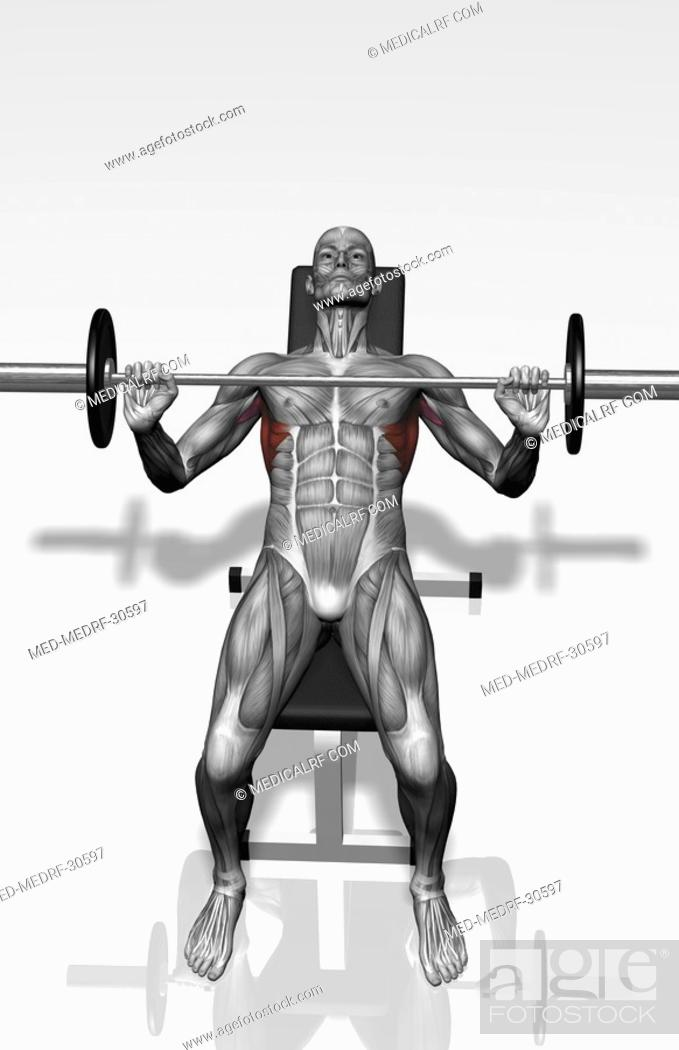 Stock Photo: Bench press incline Part 2 of 2.