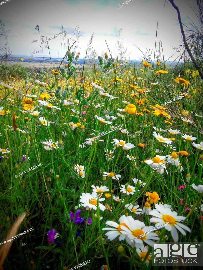 Stock Photo: Meadow, Santa Cruz de la Sierra, Cáceres, Extremadura.