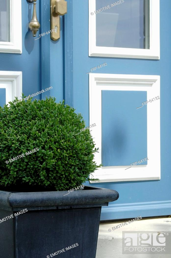 Stock Photo: Boxwood.