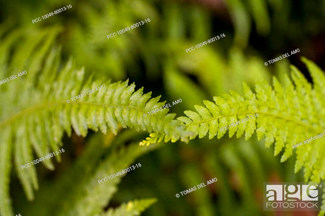 Stock Photo: Close-up of bright green ferns crossing each other at the top.