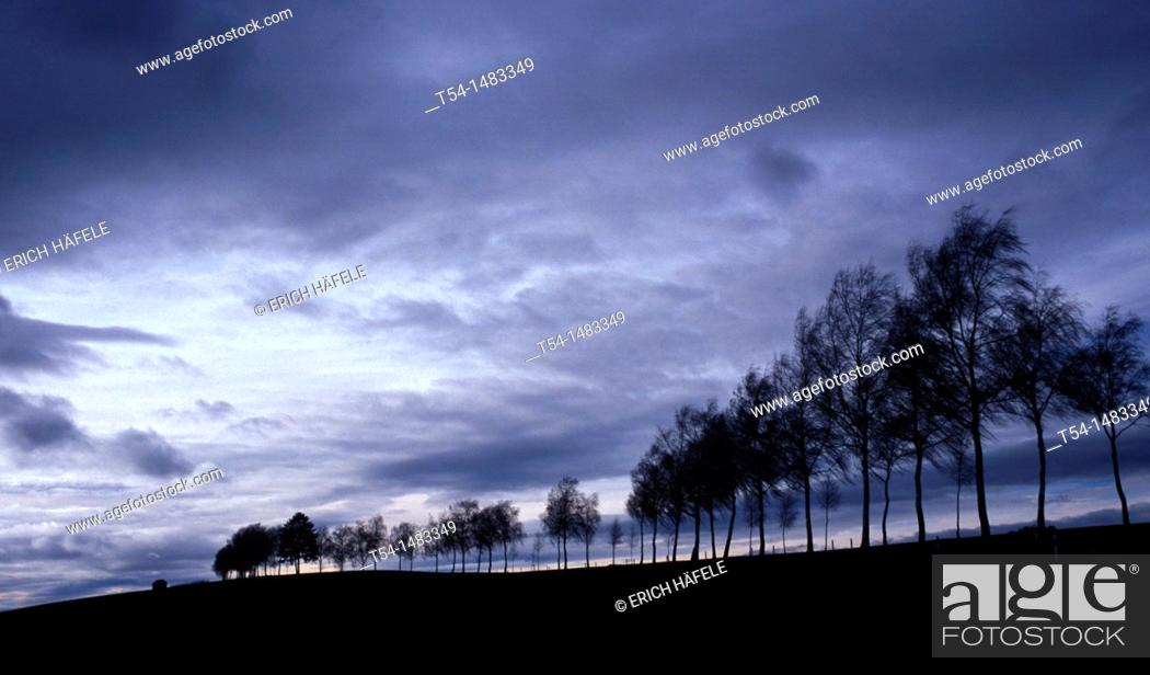 Stock Photo: Row of trees in a very gloomy autumn weather mood.