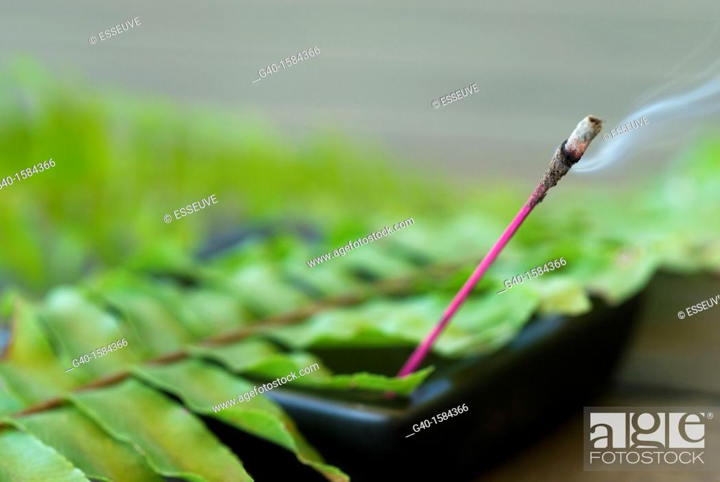 Stock Photo: fern and incense.
