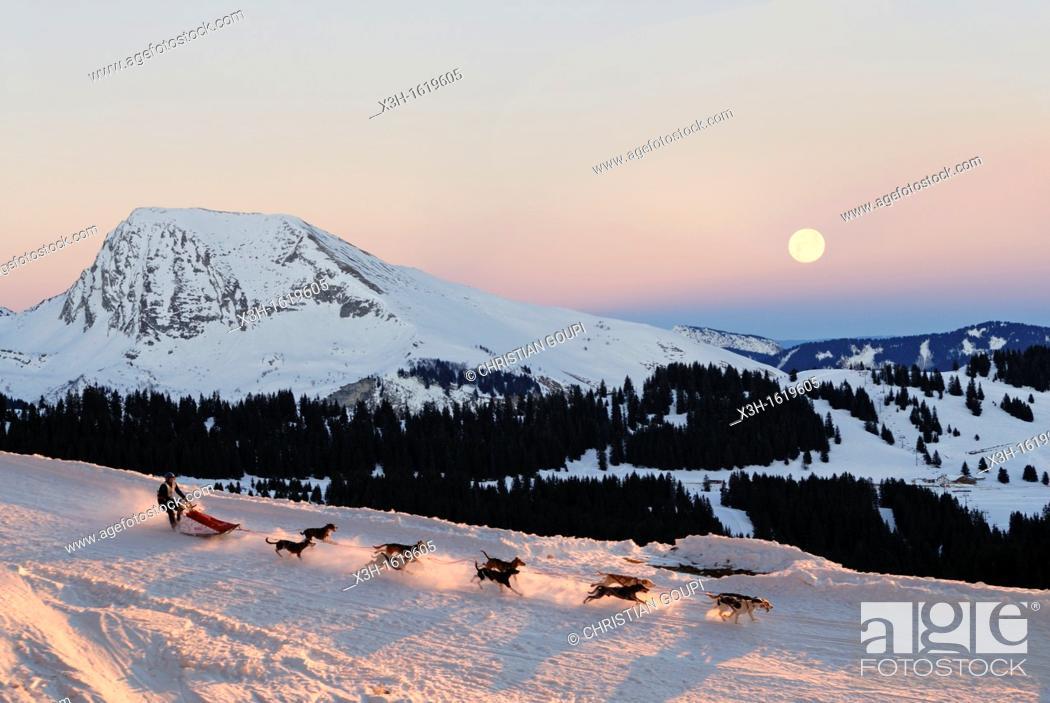 Stock Photo: La Grande Odyssee, international sled dog race Haute-Savoie department, Rhone-Alpes region, France, Europe.