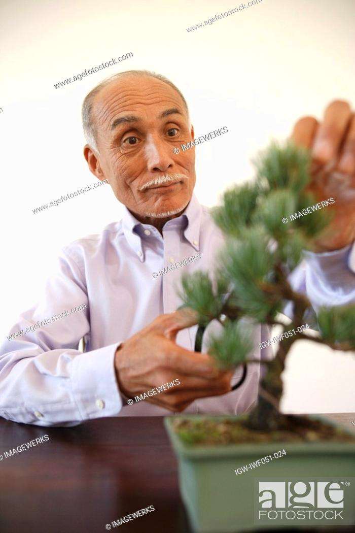 Stock Photo: Senior man pruning potted plant.