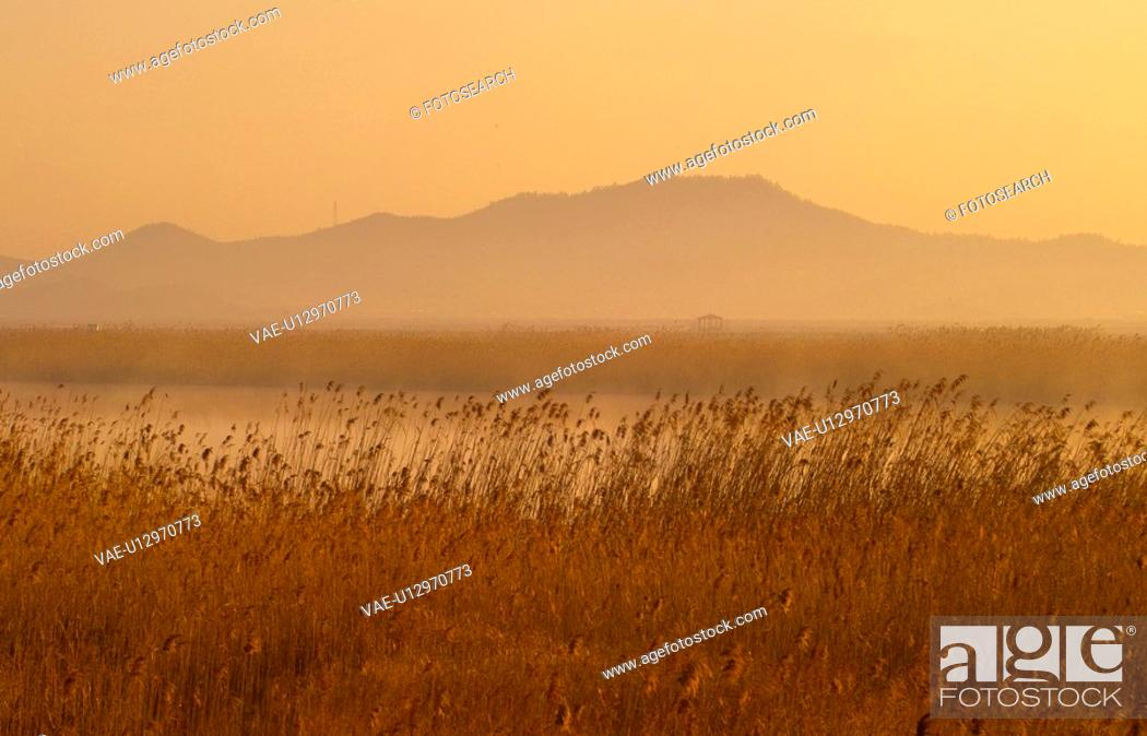 Stock Photo: eulalia, field, plant, scenery, nature, plants, mountain.