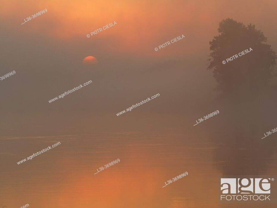 Stock Photo: Poland. Podlasie region. Misty morning on river Bug near Wajkow village.