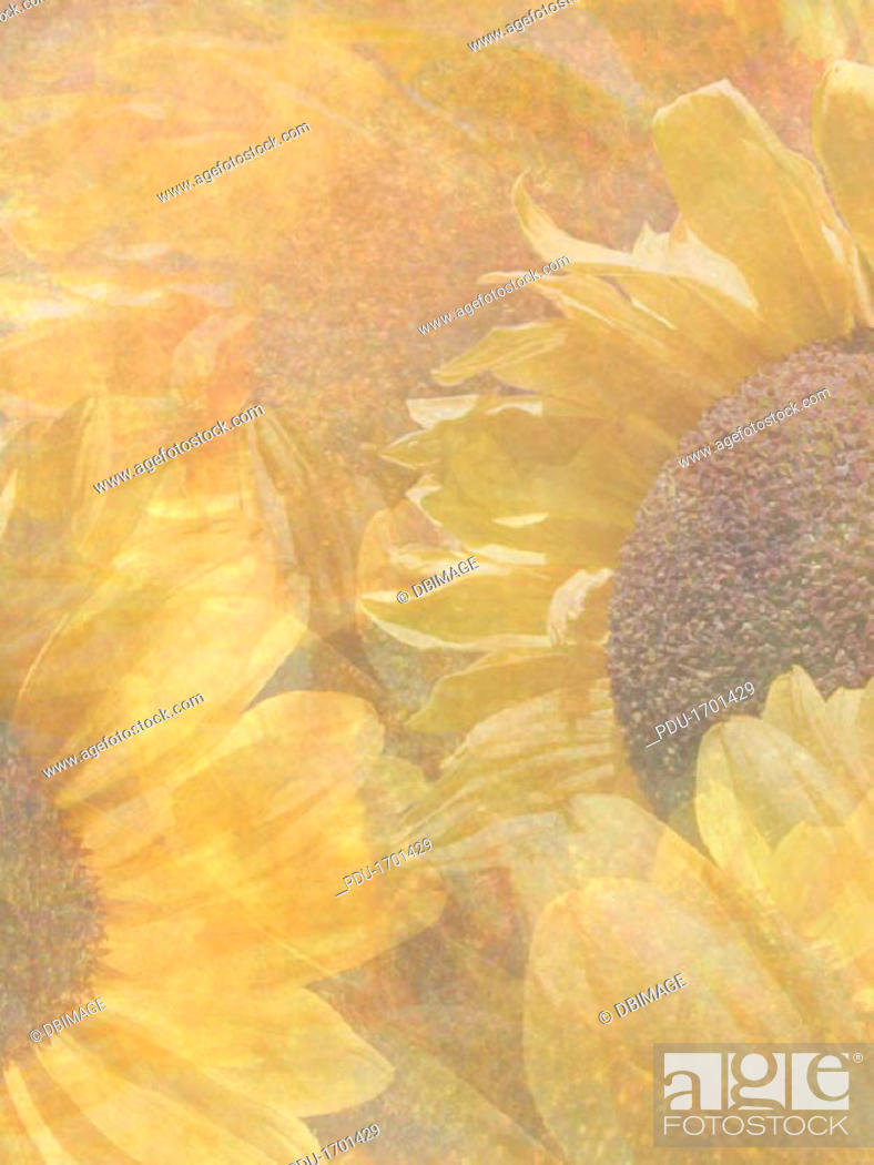 Stock Photo: Big Suns.