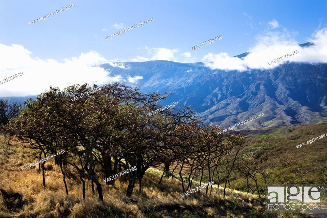 Stock Photo: Landscape of Maui, Hawaii with trees in foreground and mountains in background covered in clouds.