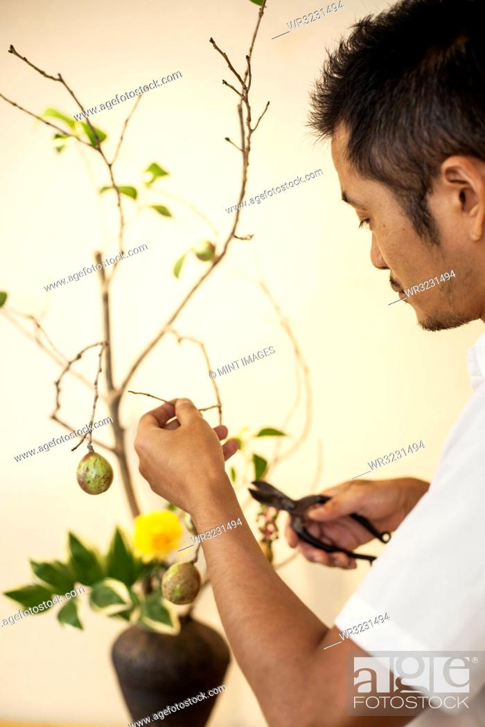 Stock Photo: Japanese man working in a flower gallery, working on Ikebana arrangement, using secateurs.