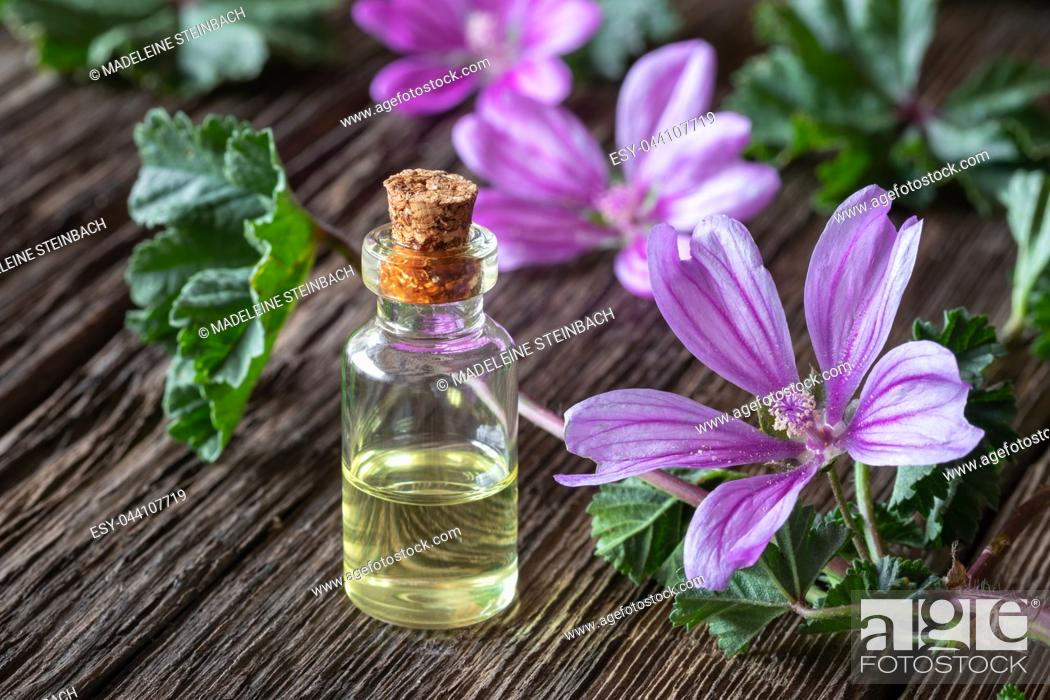 Stock Photo: A bottle of mallow essential oil with fresh blooming malva sylvestris plant.
