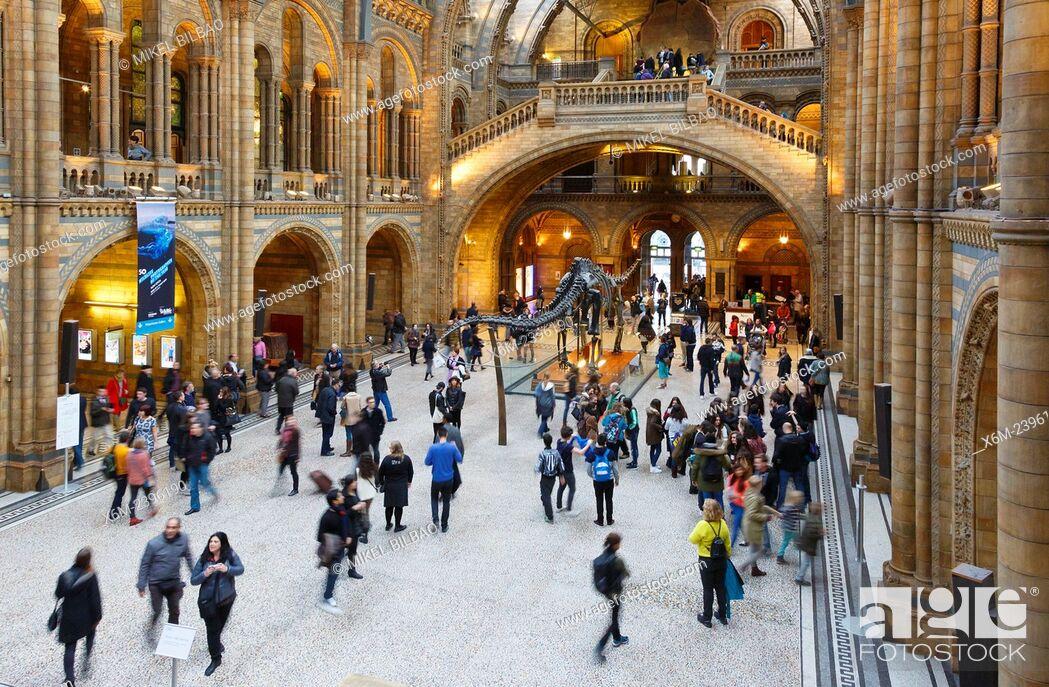 Stock Photo: Natural History Museum. London, England, United kingdom, Europe.